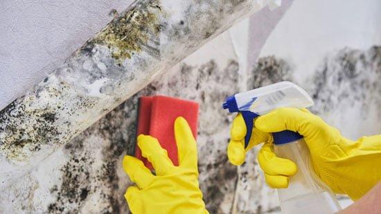 害虫駆除は自力で可能なのか?について考える
