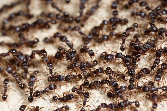 害虫の被害を拡大防止することもできる
