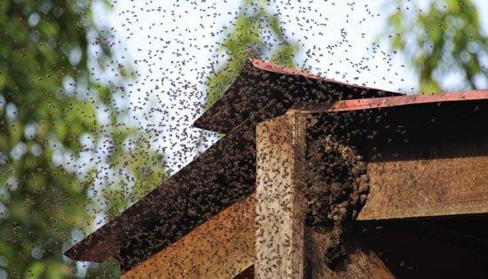 ハチ 駆除