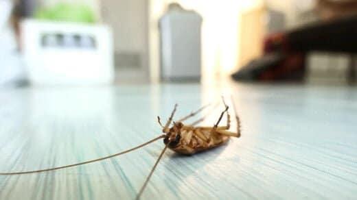 ゴキブリを完全に撃退して退治するには